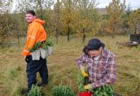 Tree planting at Tumastaðir Forestry Station (Daniel Lassak)
