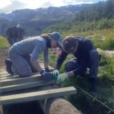 Bridge building (Jenny Allen)