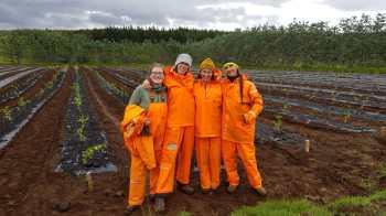 Tree planting team at Tumastaðir Forestry Station (Michelle Pröstler)